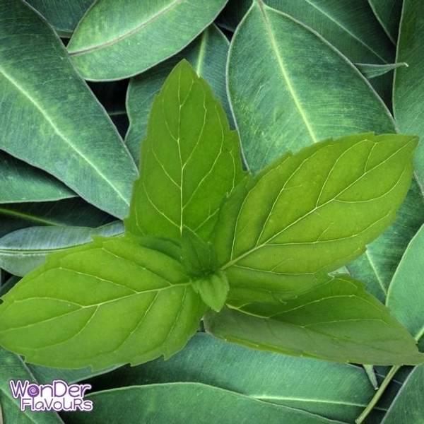 Bilde av Wonder Flavours (WF) - Eucalyptus Mint SC, Aroma